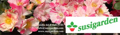 Susigarden_dic13