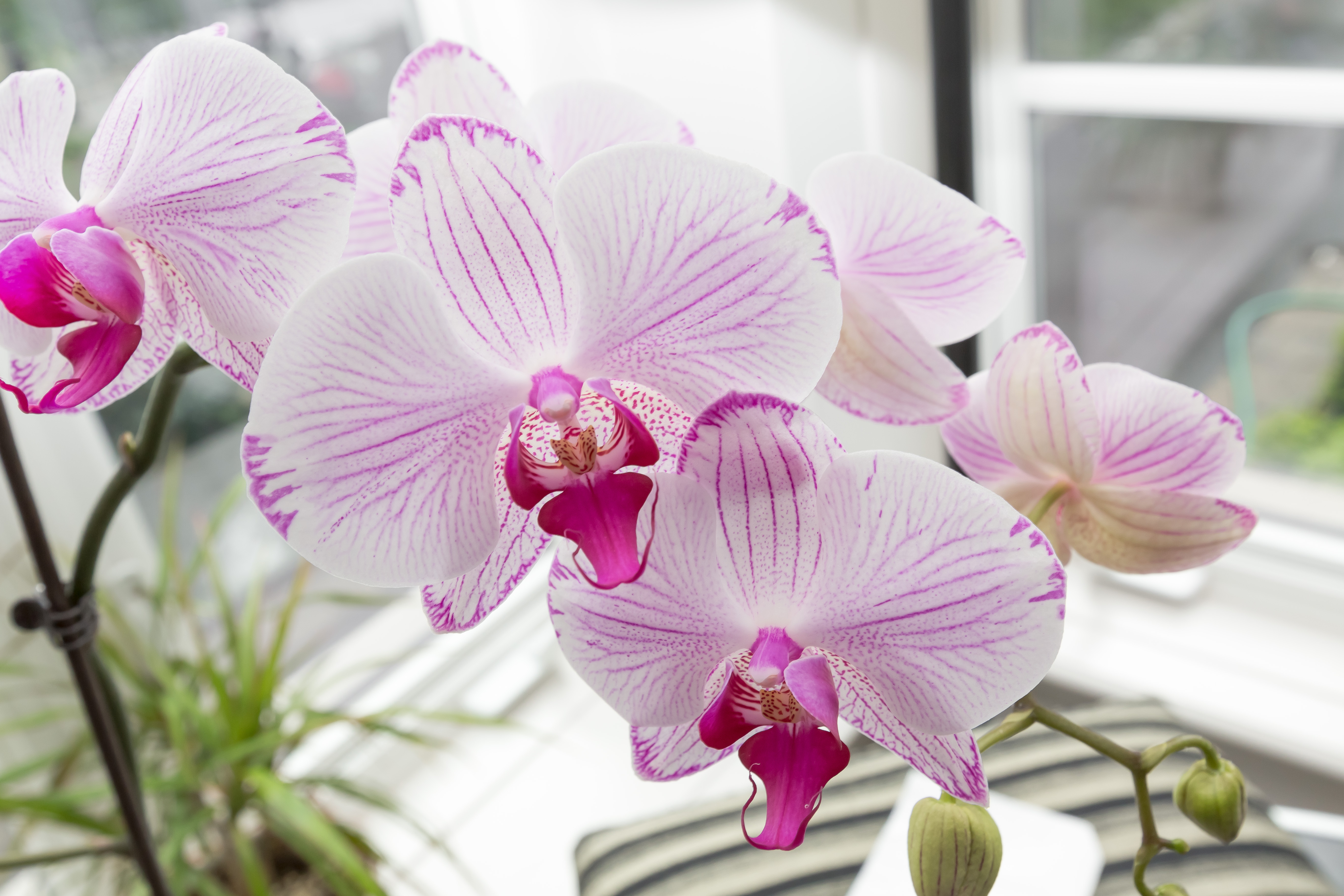 ORCHIDEE IN INVERNO