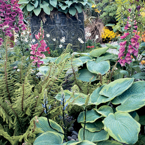 Hosta con felci e Digitalis